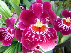Html, Nature, Photos, Orchid Cactus, Plant, Pictures, Naturaleza, Photographs, Natural