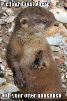 Sooo otterly adorable!