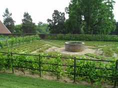 Formal kitchen garden. Colonial fencing surrounds the vegetable gardens at Mount Vernon in Virginia and supports well-pruned grape vines.