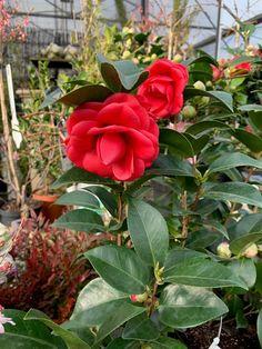 Flower Pots, Flowers, Plants, Flower Vases, Plant Pots, Plant, Planters, Royal Icing Flowers, Flower