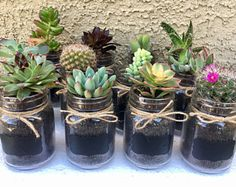 12 Party Favors- Mini Succulents in Small Mason Jars