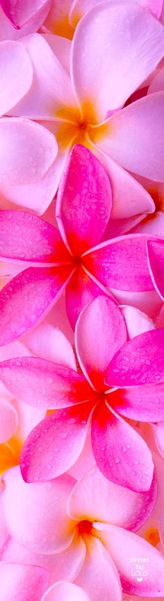 exotic flowers clipart exotic flowers c