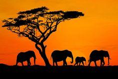 This is AFRICA!! Kenya