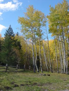 #ridecolorfully through the Aspens near Ruidoso, NM and stop for a picnic lunch to listen to their leaves rustling in the cool mountain breezes.
