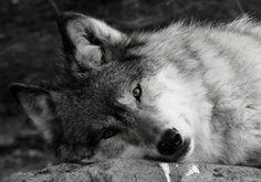 Silencio...paz..
