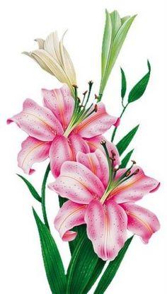 - I absolutely love botanical illustrations! Botanical Flowers, Tropical Flowers, Botanical Prints, Small Flowers, Illustration Botanique, Botanical Illustration, Art Floral, Flower Images, Flower Art