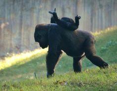 """""""Piggy-Back Ride""""  www.500px.com/MFitz"""