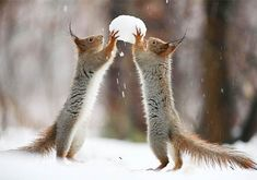Funny Squirrels Playing With Camera Snow And Nuts Cute Squirrel Pictures