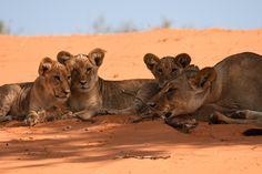 Entre visages souriants, majestueux animaux et paysages impressionnants découvrez à travers ces trois catégories les photos qui m'ont le plus touché ! Rhino Africa, Lion Sculpture, Statue, Photos, Art, Majestic Animals, Smiling Faces, Africa, Impressionism