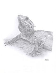 BEARDED DRAGON Limited Edition art drawing by ArcadiaPortraits