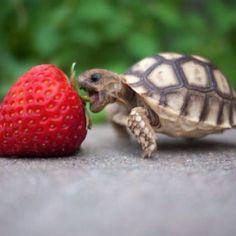 Go for it little guy!