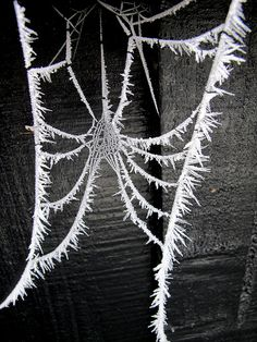 Hoar frost on a web. This is awesome!