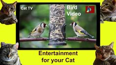 Entertainment for Your Cat- Bird Video for Cats to Watch 1 Hour