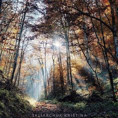 Magic forest light autumn nature landscape