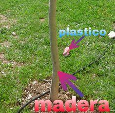 Foto recogida en el Instituto Carolina Coronado