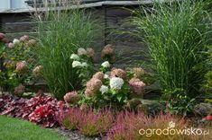 Ogródek Agam - strona 161 - Forum ogrodnicze - Ogrodowisko