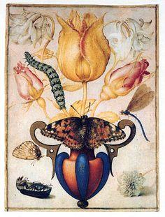 Rosen-Startseite botanical