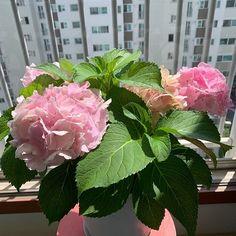 . Healthy, Plants, Life, Plant, Health, Planets