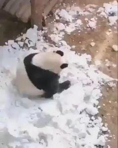 Baby Animals Super Cute, Cute Little Animals, Cute Funny Animals, Funny Dogs, Funny Panda Pictures, Cute Animal Pictures, Cute Animal Videos, Animal Jokes, Cute Panda