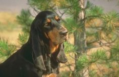 Black and Tan Coonhound Dog Puppy