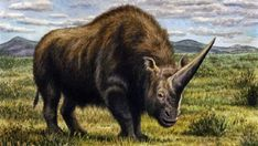 Analizan, por primera vez, el ADN del unicornio siberiano.