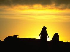 My plans usually fail if they do not involve God Penguin Walk, Tu Me Manques, Gods Plan, Lights Background, Nature Wallpaper, South America, Monument Valley, Sunrise, Wildlife