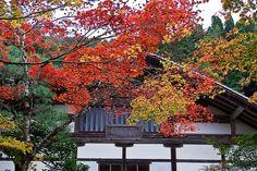 Jyousyoukouji-Temple in Kyoto Japan.