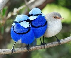 """Blue Fairy Wrens with a """"ring in"""" on the end!"""