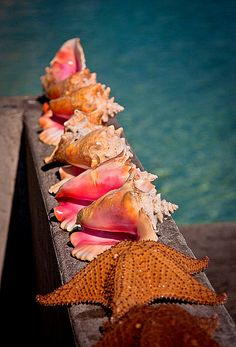 Summer beach sea shells by the sea shore :)