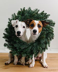 Funny dogs in Christmas wreath by Duet Postscriptum for Stocksy United