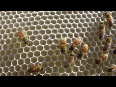 Keeping Bees - a good 10 minute video on bee-keeping