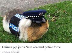 =^..^=ᖴᘢᘗᘗᖻ ᗗᘙᓿᙢᗋᒸ ᙜᕦᙏᕩᔙ ʕ•ᴥ•ʔ ~ Meanwhile in New Zealand...