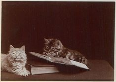 From the Americas Collections BLog post 'Editing Canada' Image: Globe Kittens (1902)