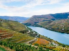 Portugal's Vinho Verde region, alternatively known as the Minho, is a lush, emerald landscape of dramatic mountains and river valleys that produces the region's inexpensive, slightly fizzy bottles, the country's answer to pinot grigio. While red and rosé varieties exist, it's predominantly white bottles that make it stateside. Fifteen grape varieties are permitted for Vinho Verde production, but newer styles using alvarinho and native loureiro make the most interesting bottles, with riper…