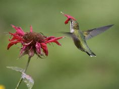Hummingbird Flowers | Photo: A hummingbird with a flower petal on its beak