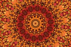 I guess I just see things differnetly - as I was pouring the dog food I thought it would kaleidoscope pretty good. You be the judge, I think it looks nice.   Dogs suffer from allergies much the same as we do, Could you spot a dog with allergies..
