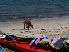 Kangaroo and Kayak