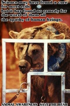 People's indifference to animal cruelty is the greatest contributor to its continuance.   If sufficient numbers said 'enough' and took action, much suffering would be alleviated.