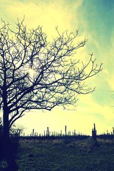 Baum im Weingarten Celestial, Sunset, Outdoor, Trees, Nice Asses, Outdoors, Sunsets, Outdoor Games