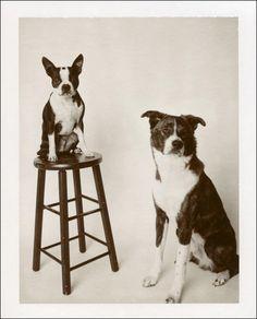 Instant Dog Portrait