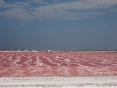 Bonaire salt pans. Ponds and pools take in seawater and allow incremental evaporation of the water until the only remaining product is sea salt. As the seawater begins to evaporate, the changing salinity levels causes the water to change color from Blue -> Green -> Brown -> Bright Pink before it completely dries and crystallizes.
