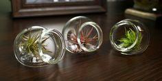 mini blown glass sitting terrarium. $25.00, via Etsy.