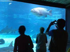 Explore the sharks in the shark aquarium at uShaka Marine World logo with Sharks, Travel Tips, Aquarium, Tours, Explore, Logo, World, Nature, Goldfish Bowl