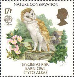 Europa. Nature Conservation. Endangered Species 17p Stamp (1986) Barn Owl