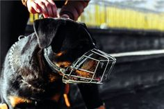 Rottweiler, Horses, Blog, Animals, Dog Breeds, Turismo, Animaux, Horse, Animal