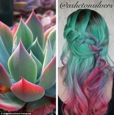 Gorgeous inspiration hair color design and style based on the Southwest's beautiful succulent plants by Asheton Silvers hotonbeauty pastel green hair color melt(Dyed Hair Green) Pastel Green Hair, Green Hair Colors, Bright Hair, Hair Dye Colors, Hair Color Blue, Cool Hair Color, Colored Hair, Red Purple, Crazy Hair Colour
