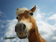#cavallo #cavalli #terradicuma #Horse #Horses #equinecare