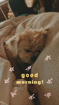 #instagram #outfits #homedecor #quotes #inspirationalquotes #aesthetic #dogs