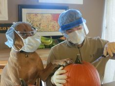 Some say that pumpkin carving is an art, not a science. My dog and I respectfully disagree - Imgur