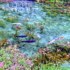 Pretty Backgrounds, Aesthetic Backgrounds, Water Aesthetic, Paradise Travel, Life Aquatic, Lily Pond, Background Pictures, Underwater Photography, Photo Reference